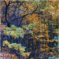 Осень :: Ренат Менаждинов