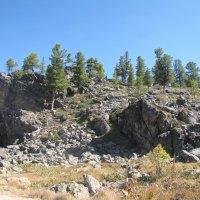 И на камнях растут деревья :: Ольга Иргит