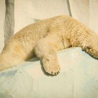 Спят усталые мишутки... :: Татьяна Степанова