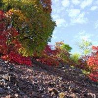 краски природы :: АНДРЕЙ федорцов