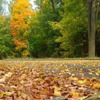 Осенняя пора... :: Владимир Буравкин