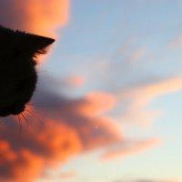 моя котэ :: Лиза Игошева