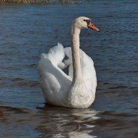 Красавица озера Ороно :: Boris Казёнов