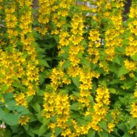 Цветы у дома :: Ueptkm