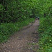Прогулки в Летнем Парке :: юрий поляков