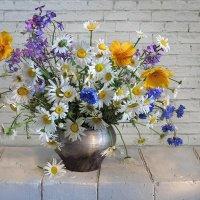 Полевые цветы :: Алла Шевченко