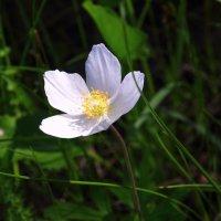 Неизвестный цветок. :: Victor Klyuchev