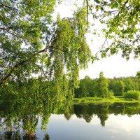 Берёзка над озером :: Андрей Снегерёв