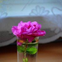 Одиночество :: Татьяна Лютаева