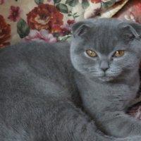 Кошка Кэти :: Герович Лилия