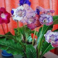 Цветочки. :: ANNA POPOVA