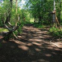 В лесу по имени ПАМЯТЬ... :: Tatiana Markova