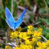 Голубая мечта :: Артур Хороший