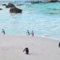 Пингвины на пляже Болдерс :: Андрей K.