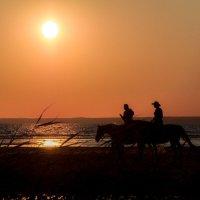 Дикий запад на сестрорецком пляже. :: Василий Максимов