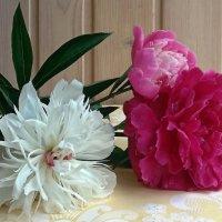 Три цвета пионов :: Galina Solovova