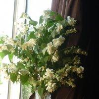 Лето на моём окне... :: Татьяна Юрасова