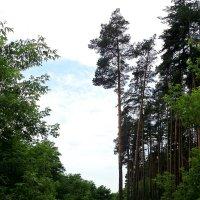 Сосна, дорога, небо :: MarinaKiseleva