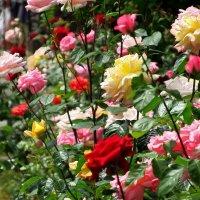Розовый рай :: mAri