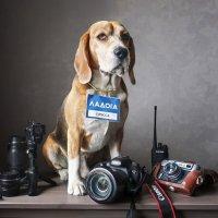 Пёс фотографа. Он же блоХер и краевед :: Тата Казакова