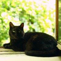 Мой кот Кузьма. 30.06.2020г. Первая проба объектив: Вега-1 1:2,8 F=5см №000311 КМЗ :: Виталий Виницкий