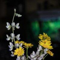 Букетик полевых цветов :: Ефим Журбин
