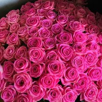 101 Роза дня любимой!!! :: Tatiana Kretova
