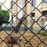 В московском зоопарке... :: Елена