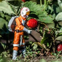 """""""И на Марсе будут... ягоды расти""""! :: Андрей Щетинин"""