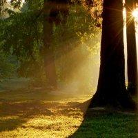 Утро в парке........... :: Юрий Цыплятников