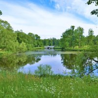 Летняя идиллия Ламского пруда... :: Sergey Gordoff