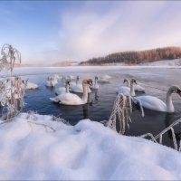 Утро на Лебедином озере :: Влад Соколовский