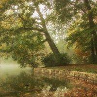 Одним утром в парке :: Alexander Andronik