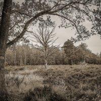 Есть деревья разные :: Николай Гирш