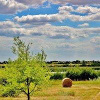 Вот и лето пошло на убыль. Стали травы косить луговые..... :: Восковых Анна Васильевна
