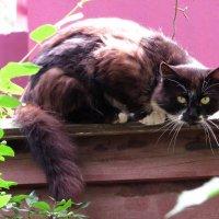 Дикий кот :: Андрей Снегерёв
