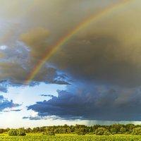 Ливень под радугой :: Арина