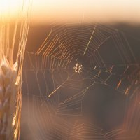 Вечер паука - 2 :: Pavel Stolyar