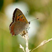 ну вот и бабочки...1 :: Александр Прокудин