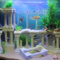 Домашний аквариум) :: Эля Юрасова