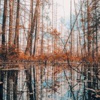 Лесные красоты 2. :: Виктория Писаренко