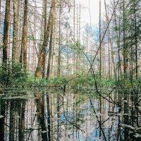 Лесные красоты 1. :: Виктория Писаренко