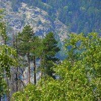В горах :: Татьяна Тюменка