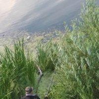 Рыбак :: Марина Кушнарева