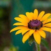 Какой-то красивый сорняк :) :: Алексей Кузьмичев