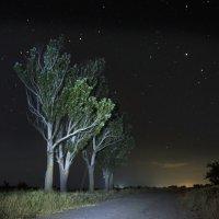 Ночная дорога :: Александр Довгий