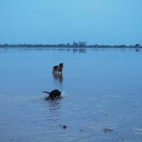 Бывалый пёс учит мелкую правильно мыть лапы :: Сергей Воинков