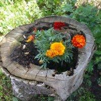 Цветы на пеньке :: Наиля