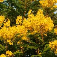 Цветущее дерево. :: Валерьян Запорожченко
