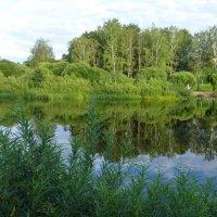 Река Пскова :: Лидия Бусурина